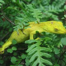Green gecko in the forest