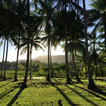 Sunlight through the Palmtrees at the countryside in Anda Bohol the Philippines