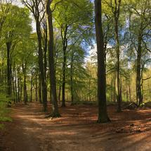Walk trail at the hoge veluwe in Ede The Netherlands