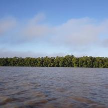 Commewijne river in Suriname in the morning