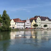 Swan family swimming upstream at the Isar river in Landshut Germany