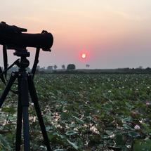 Binocular during sunrise at a lotus field at the countryside of Siem Reap Cambodia