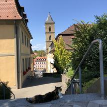 Cat around the church St. Maria und St. Theodor in Bamberg, Germany