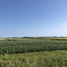 Farmland around Sint Jacobiparochie in Friesland The Netherlands