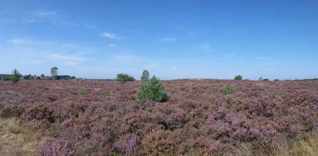Panoramic Landscape at the National Park Sallandse Heuvelrug in The Netherlands