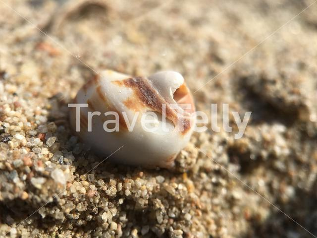 Little shell in the sand