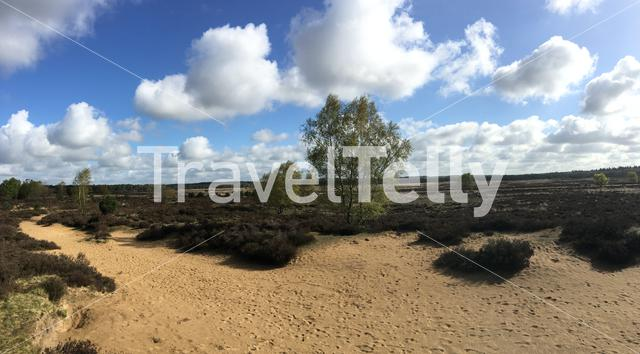Panorama from the heide at the hoge veluwe in Ede The Netherlands