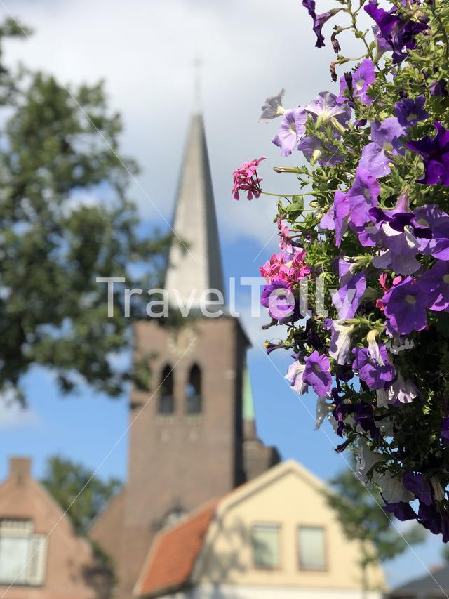 Flower with in the background the Parish Church of the Holy Spirit in Heerenveen, Friesland The Netherlands