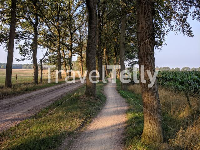 Bicycle path around Haarle in The Netherlands