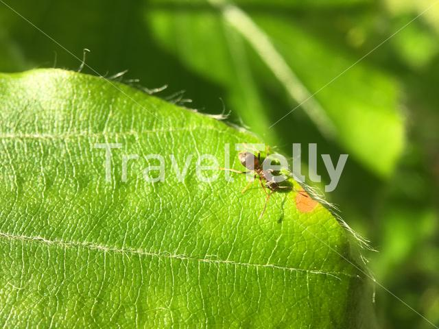 Macro from an ant on a green leaf