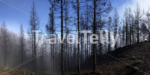 Panorama from burned forest on Gran Canaria
