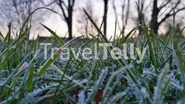 Frozen grass in the morning
