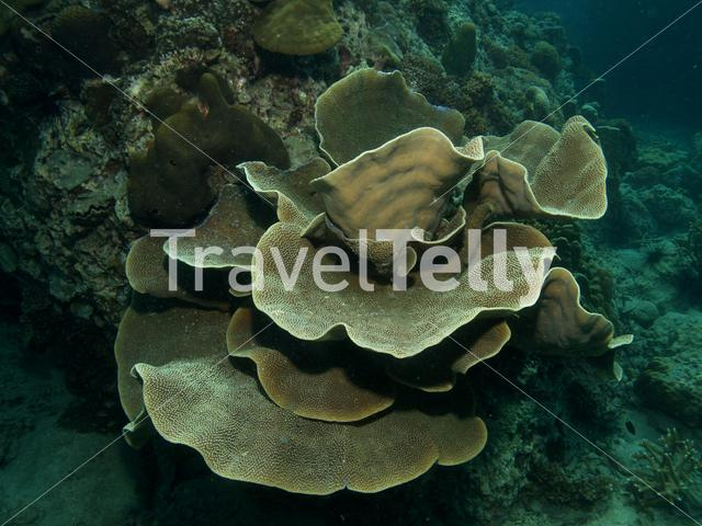 Hard coral in Koh Chang Thailand