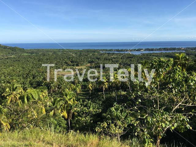 Look out towards the sea with Palmtrees in the hills of Anda Bohol the Philippines