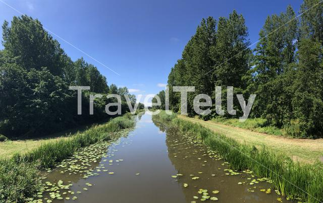 Canal with seeblatt in Friesland, The Netherlands