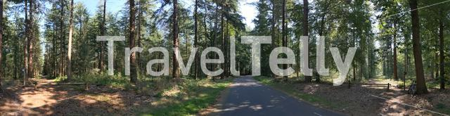 Road through the forest at the Lemelerberg in Overijssel, The Netherlands