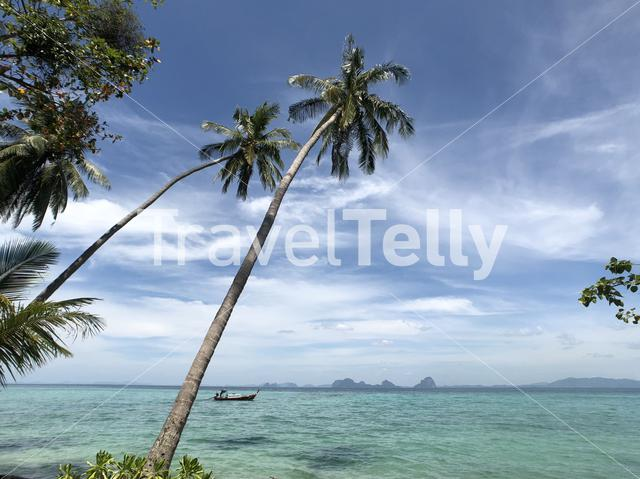 Palm trees on Koh Ngai in Thailand