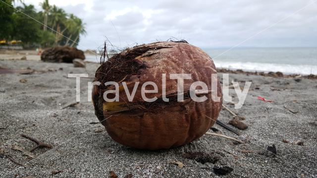 Coconut at the beach from Montezuma Costa Rica
