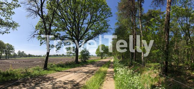 Bicycle path around Bentelo in The Netherlands