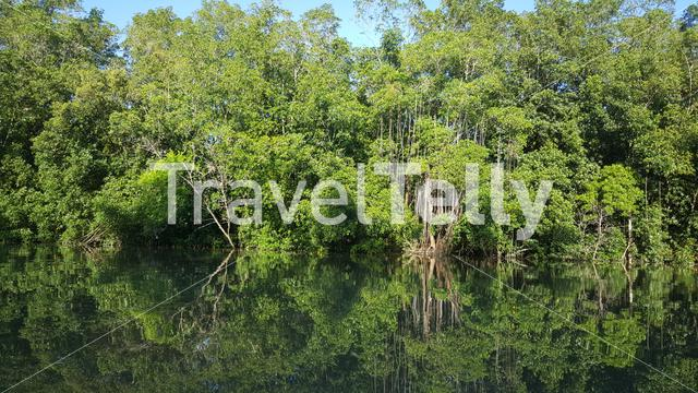Commewijne river in Suriname with mangrove