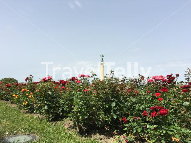 Flowers and the The Victor statue at Kalemegdan Fortress in Belgrade Serbia