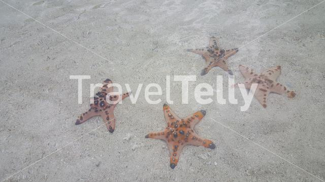 Starfish in clear water at Port Barton rif