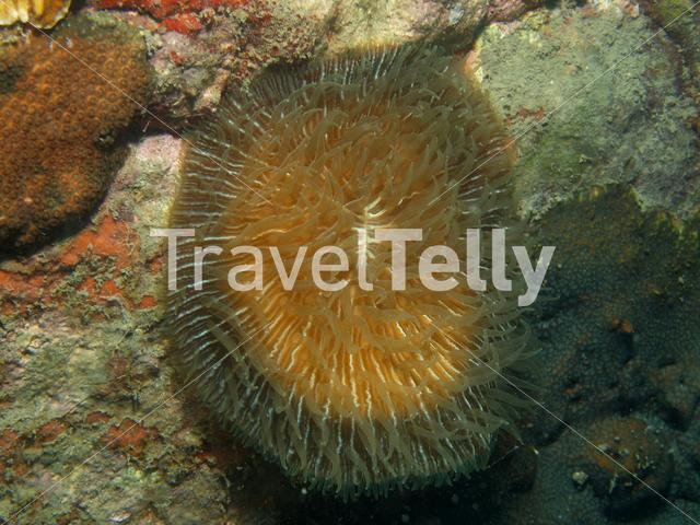Soft coral in Koh Chang Thailand
