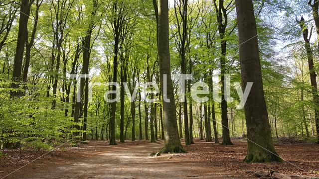 Edese Bos in the province of Gelderland The Netherlands