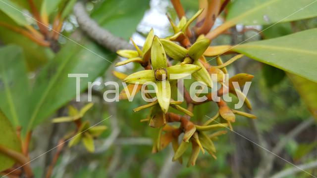 Mangrove Flowers in Kiang West National Park Gambia, Africa