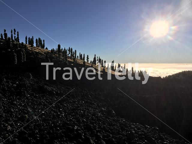 Sunshine above the clouds with a fir landscape at Teide National Park in Tenerife the Canary Islands