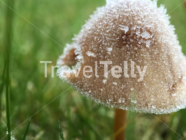 Ice on a mushroom in The Netherlands