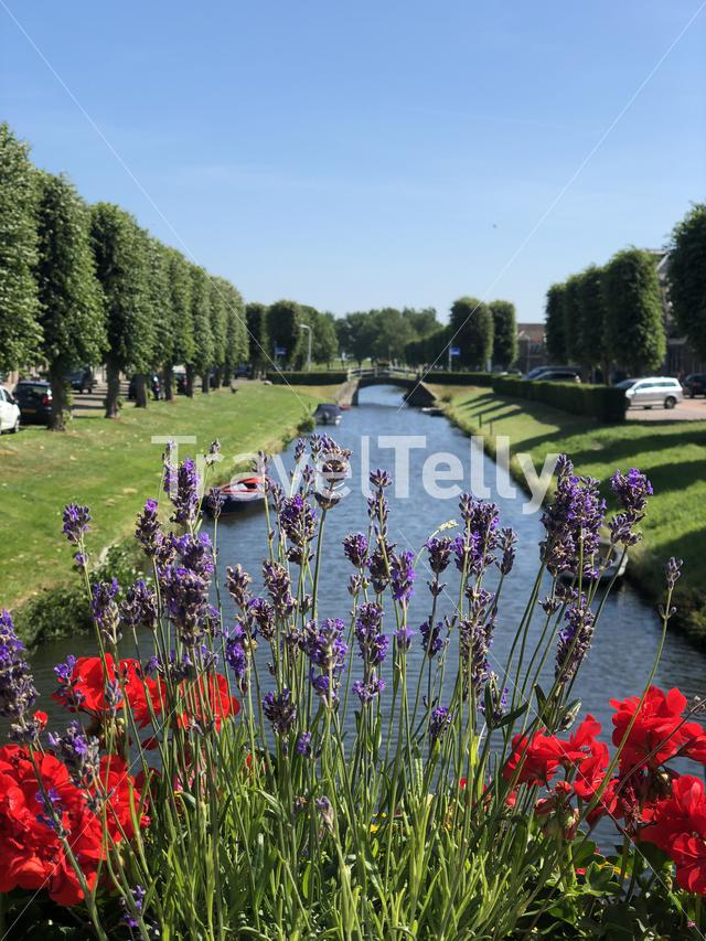 Flowers on a bridge over a canal in Stavoren, Friesland The Netherlands