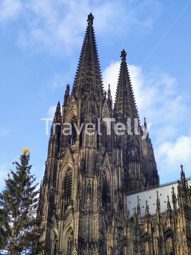 Cologne cathedral with a christmas tree