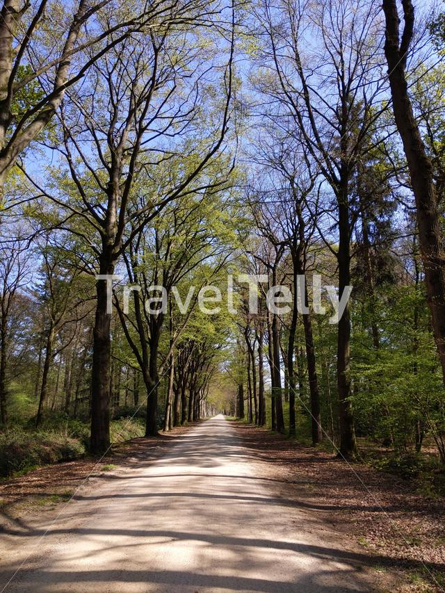 Road through the forest around Medler during spring in Gelderland, The Netherlands