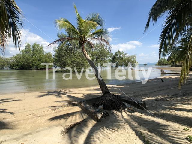 Palm tree at the beach on Koh Mook Thailand