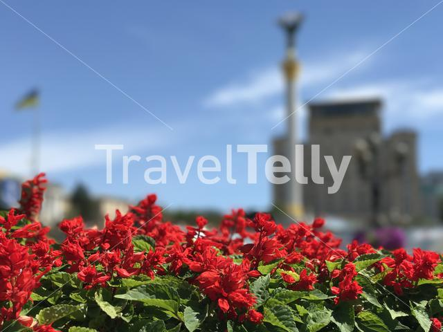 Red flowers with The Founders of Kyiv Monument in the background in Kiev Ukraine