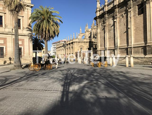 Horse and carriage in front of the Seville Cathedral in Seville Spain