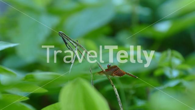 Beautiful dragonfly sitting on a branch at the countryside of the Philippines