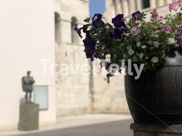 Flower in front of the St. Chrysogonus Church in Zadar Croatia