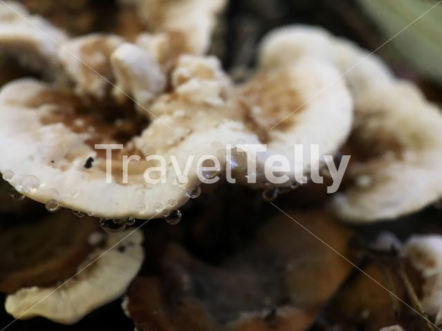 Raindrops on a mushroom in The Netherlands