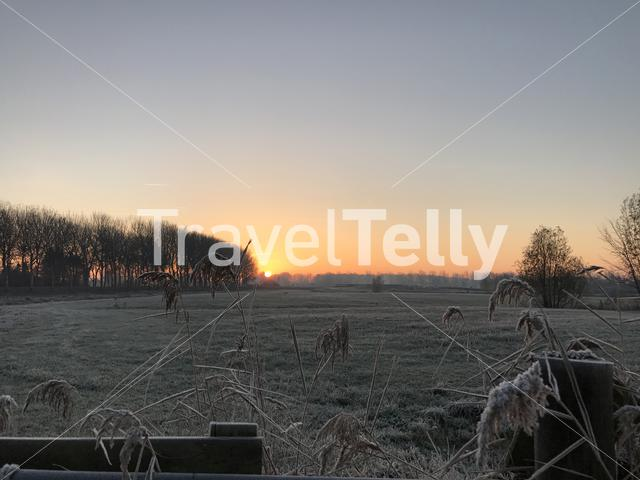 Sunrise with reed and farmland in Sneek The Netherlands