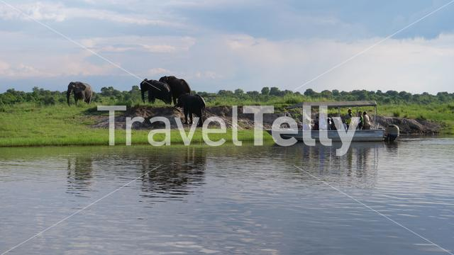 Tourists in a boat watching elephants in Chobe National Park, Botswana
