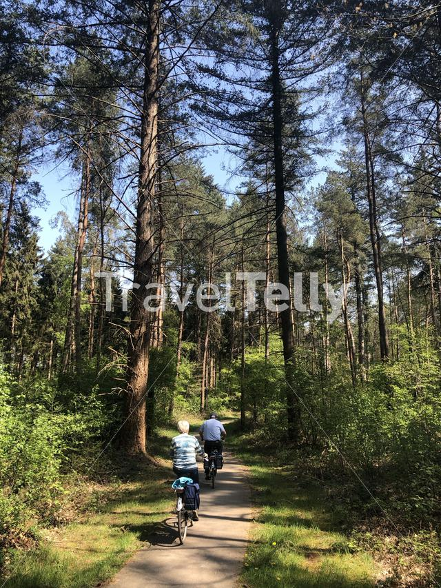 Couple cycling through the forest around Ommen in The Netherlands
