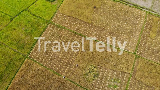 Aerial of rice terraces in countryside of the Philippines