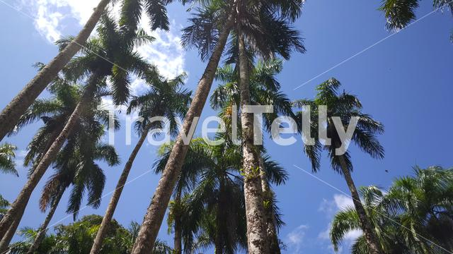 Palm Gardens in Paramaribo Suriname