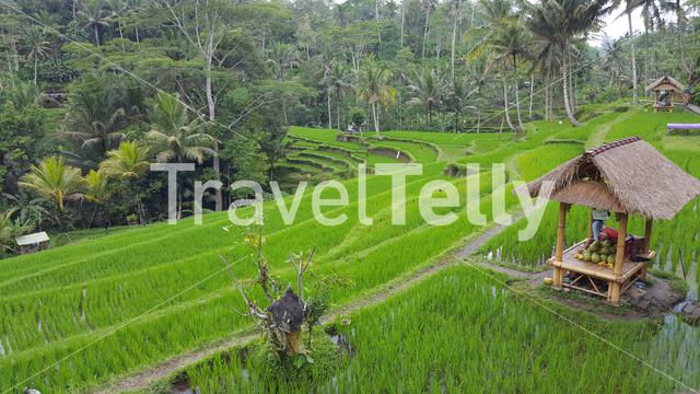 Paddy field with an offer altar in Bali Indonesia