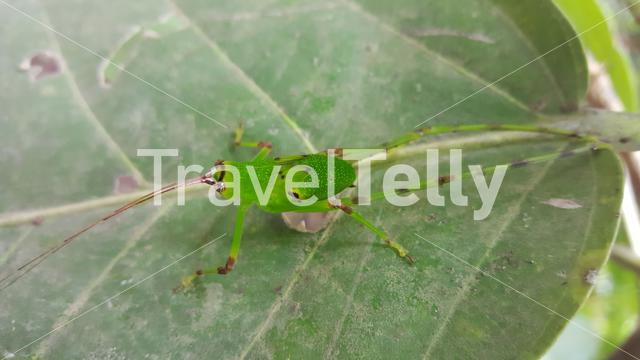 Bug on a leaf around the Kambadaga Falls in Guinea, Africa