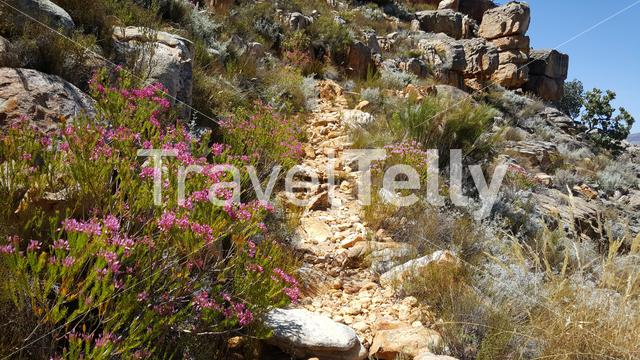 Hiking path at Cederberg Wilderness Area in South Africa