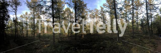 Panorama from forest at the Sallandse heuvelrug National park in Overijssel, The Netherlands
