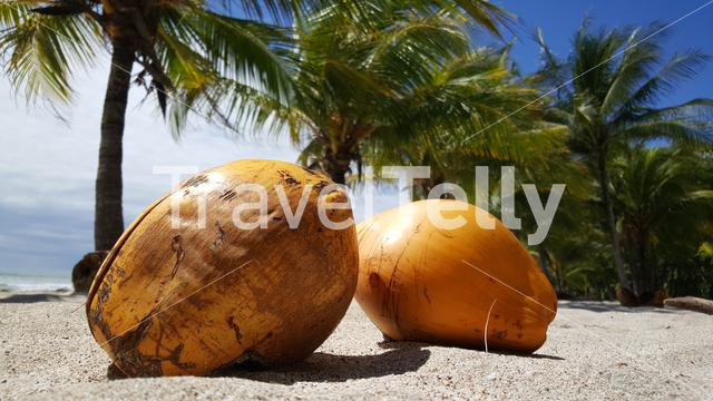 Two coconuts and palmtrees at Santa Teresa beach in Costa Rica